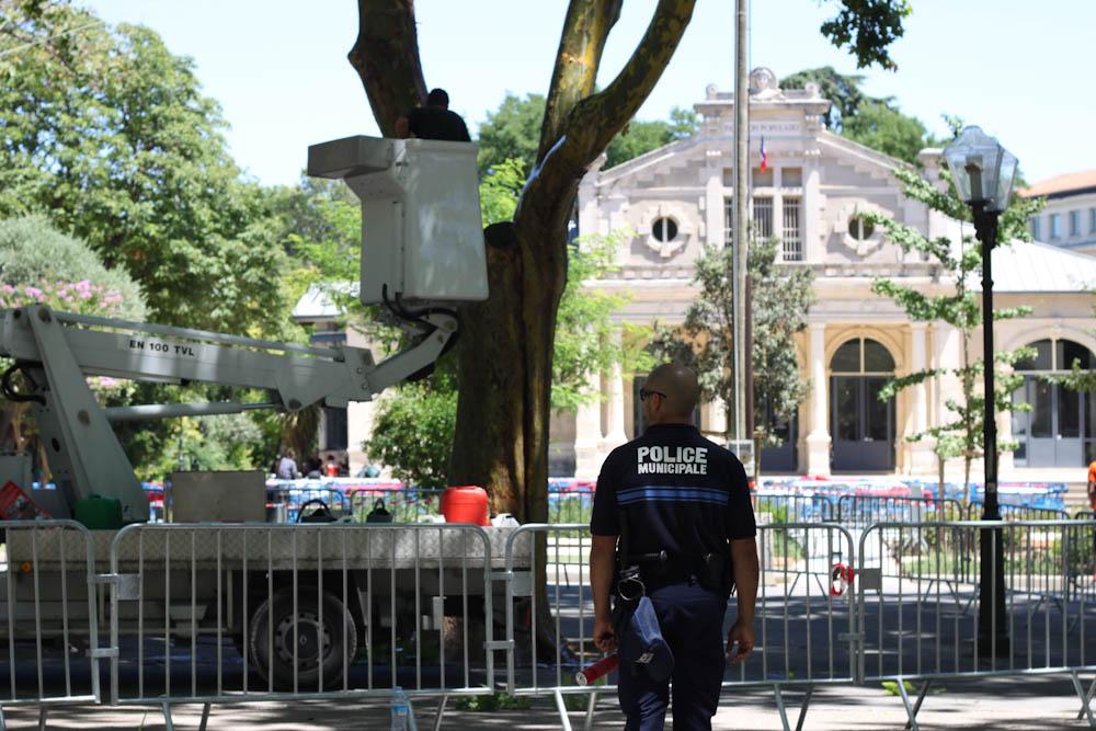 Les services des espaces verts de la mairie de Montpellier, aidés d'une nacelle, badigeonne les arbres d'un mélange de savon et d'huile d'olive pour éviter les grimpeurs (photo : J.-O. T.)