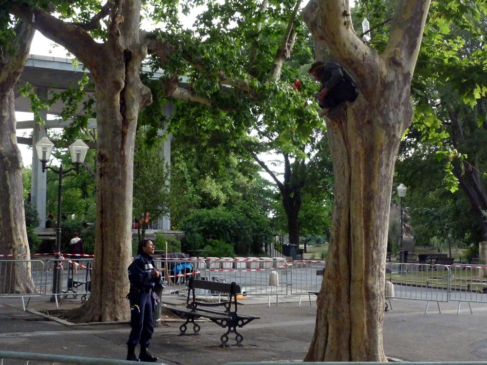 A 8h30, un grimpeur est toujours dans un arbre de l'esplanade de Montpellier. Une vingtaine de policiers municipaux sur place (photo : J.-O. T.)