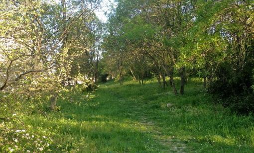 A Las Rébès, un espace vert de plus d'un hectare menacé (photo : Lucie Lecherbonnier)