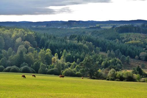 Sur le plateau de Millevaches près de Saint-Setiers en septembre 2012 (photo CC Babsy)